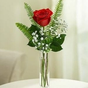 Single Rose in Vase with Greenery